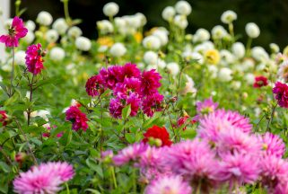 Bright flowers in the grounds of a dog-friendly hotel Dorset