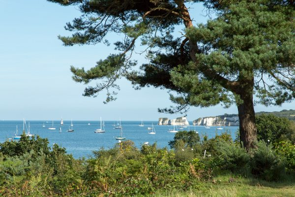 Sail boats through trees in Dorset from the garden of Knoll House.