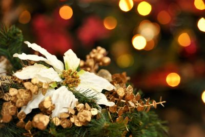 A white poinsettia and other Christmas decorations.